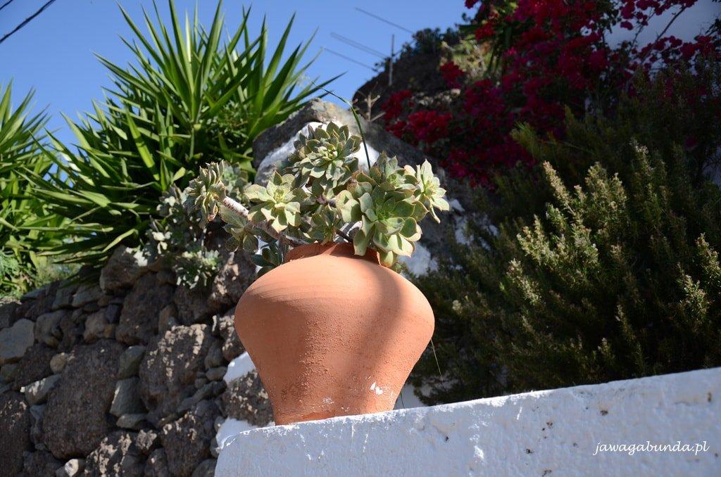 roślina w glinianej misie