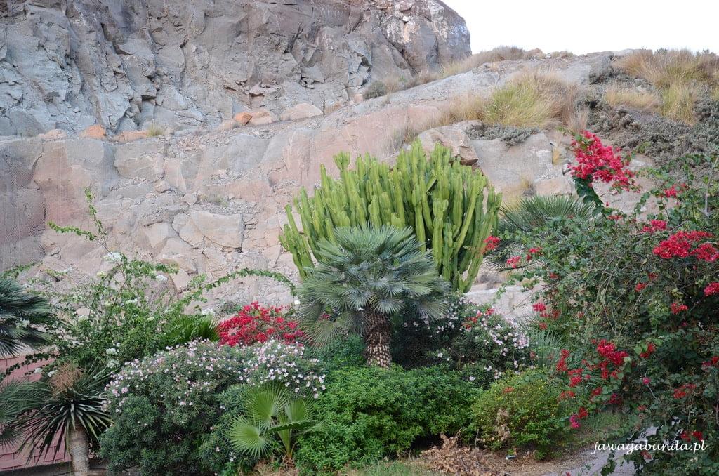 rośliny na skale