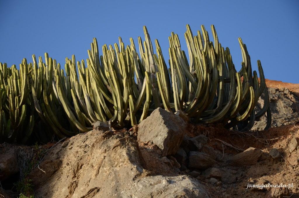 roślina rosnąca na skale