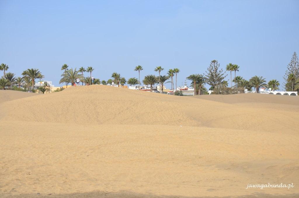 pustynia i palmy na jej brzegu