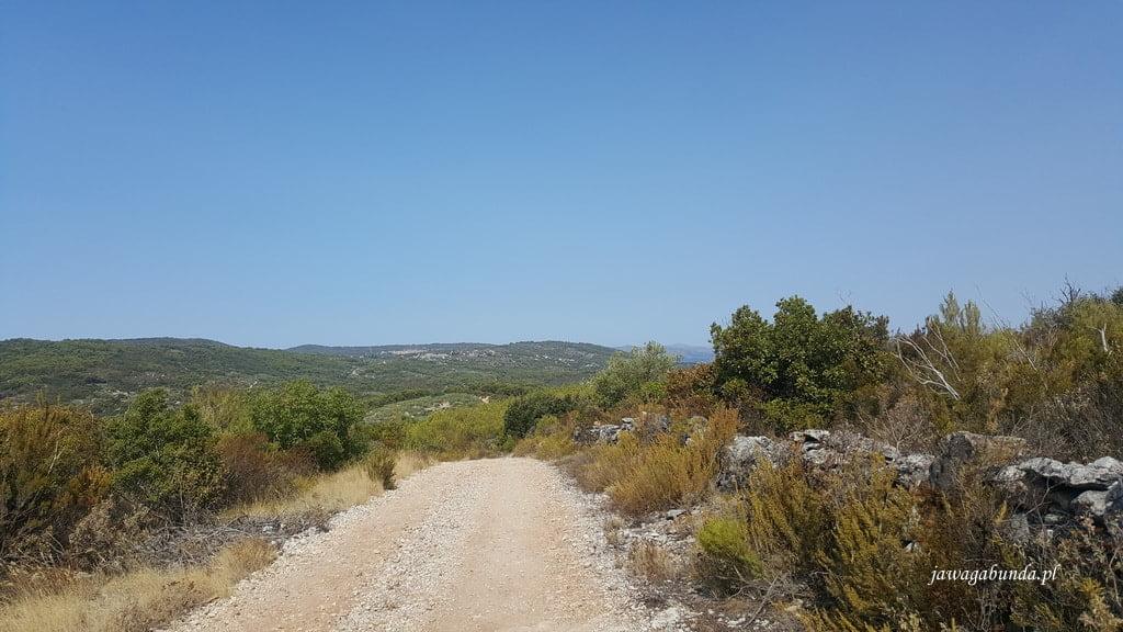 droga wśród gajów oliwnych