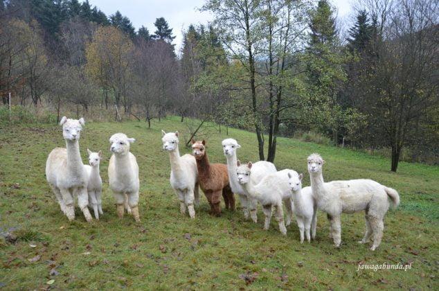 grupa Alpak