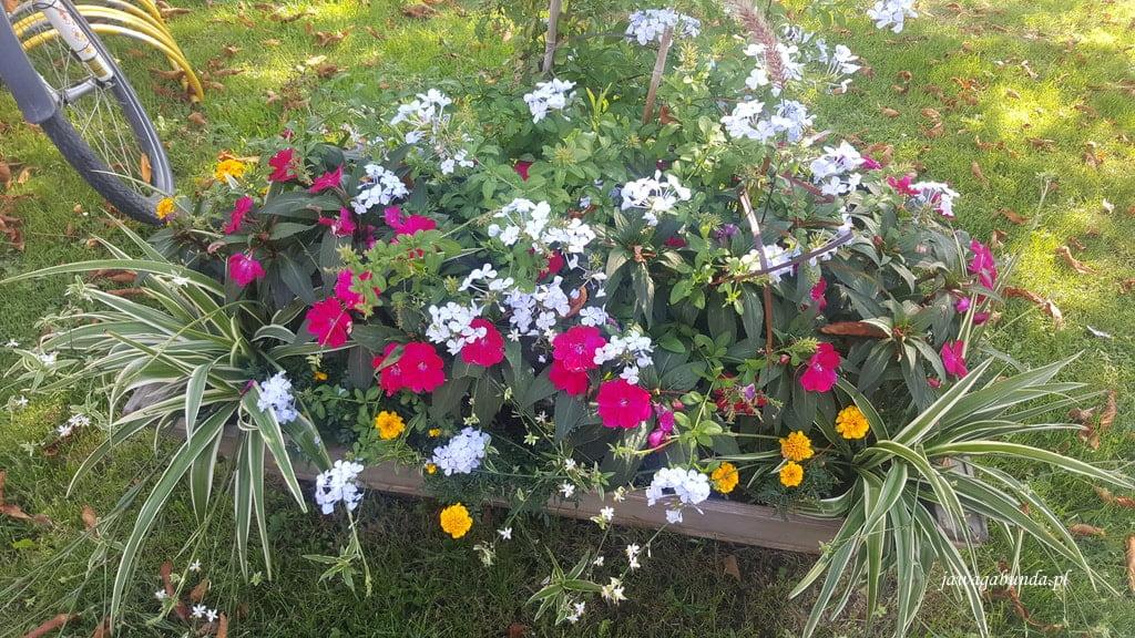 rośliny i trawy w donicy