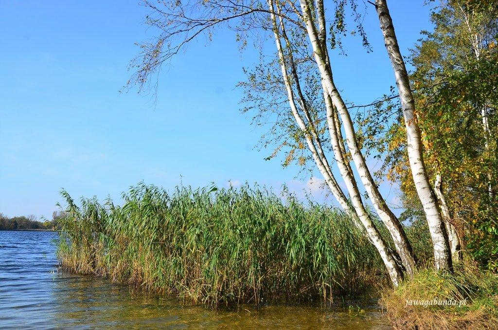 trawy nad jeziorem
