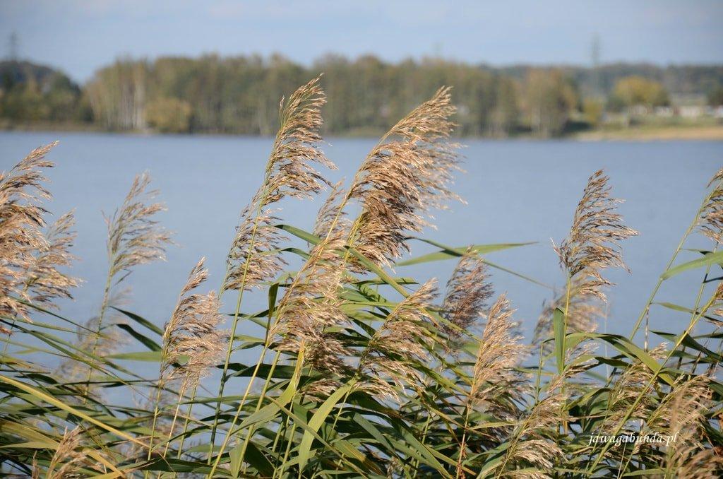 trawy nad jeziorem Paprocańskim w Tychach