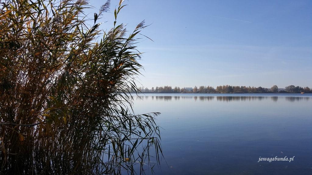 jezioro Dębowa i trawy