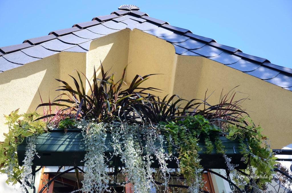trawy w skrzyni balkonowej