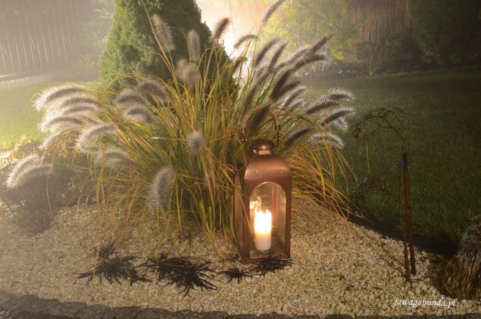 podświetlone lampą trawy ozdobne