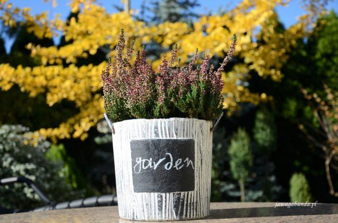 kwiaty w donicy z napisem garden