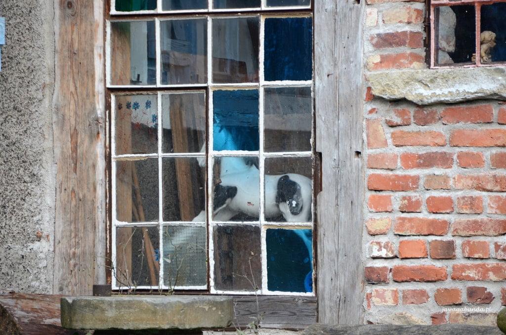 konik na biegunach za oknem