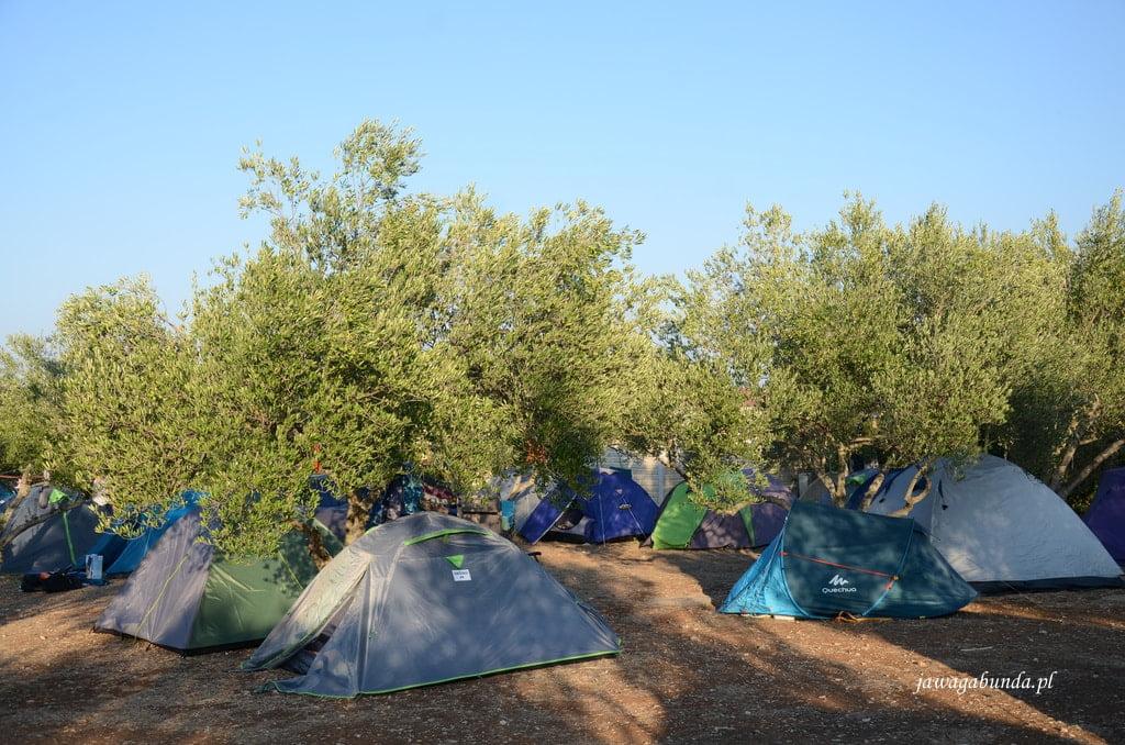 namiot w gaju oliwnym