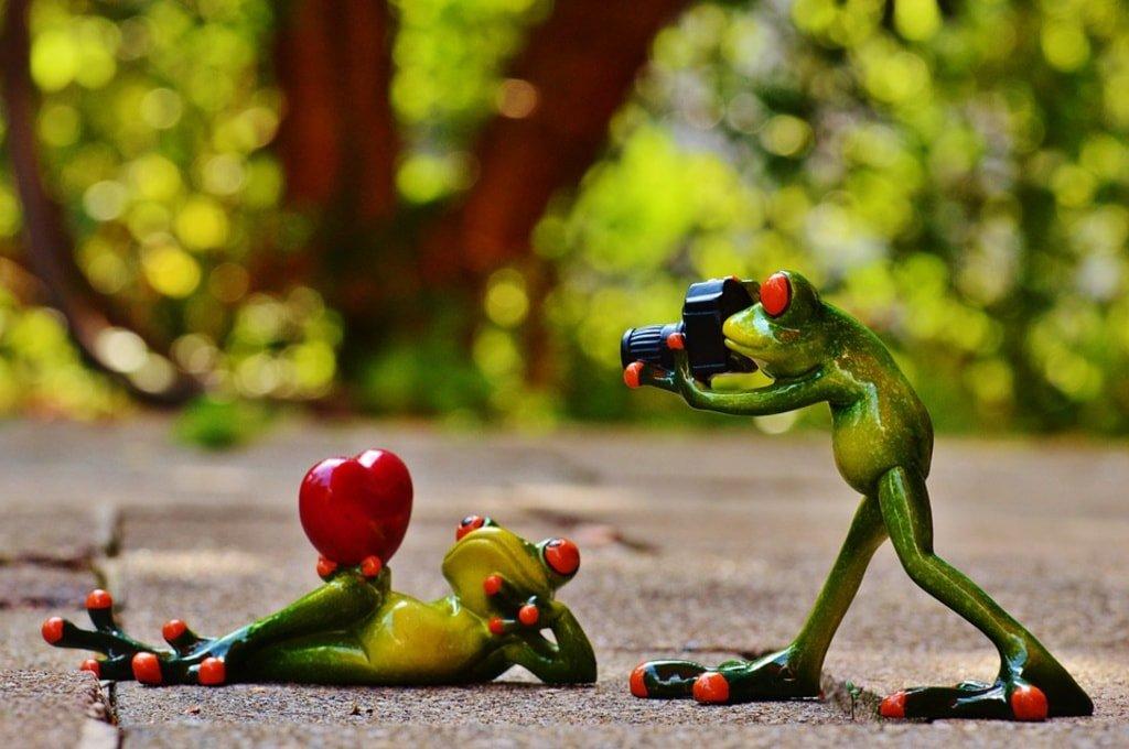 żaby robiące zdjęcie