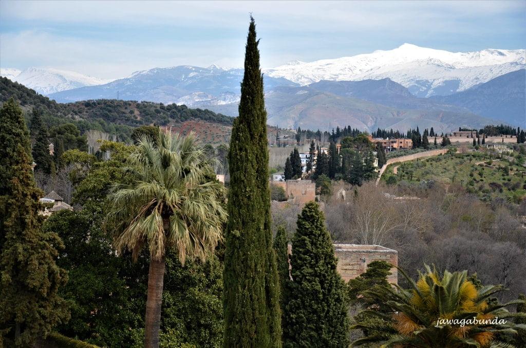 palmy zamek a w tle góry zaśnieżone