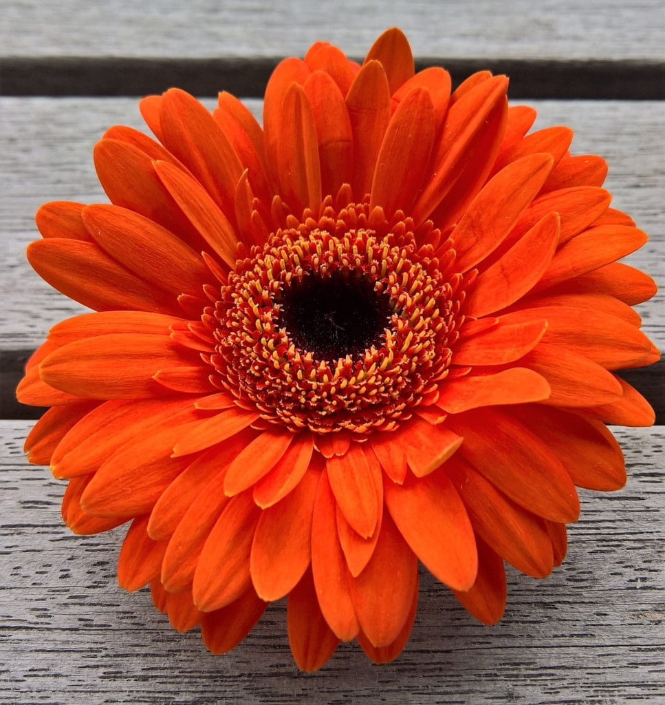 kwiat w donicy