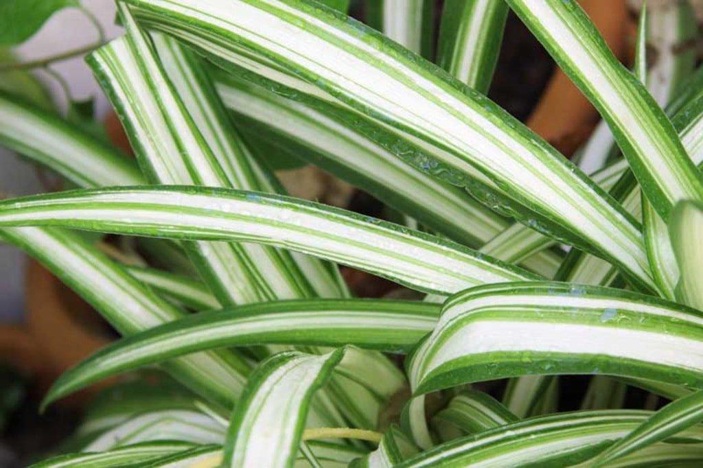roślina w donicy
