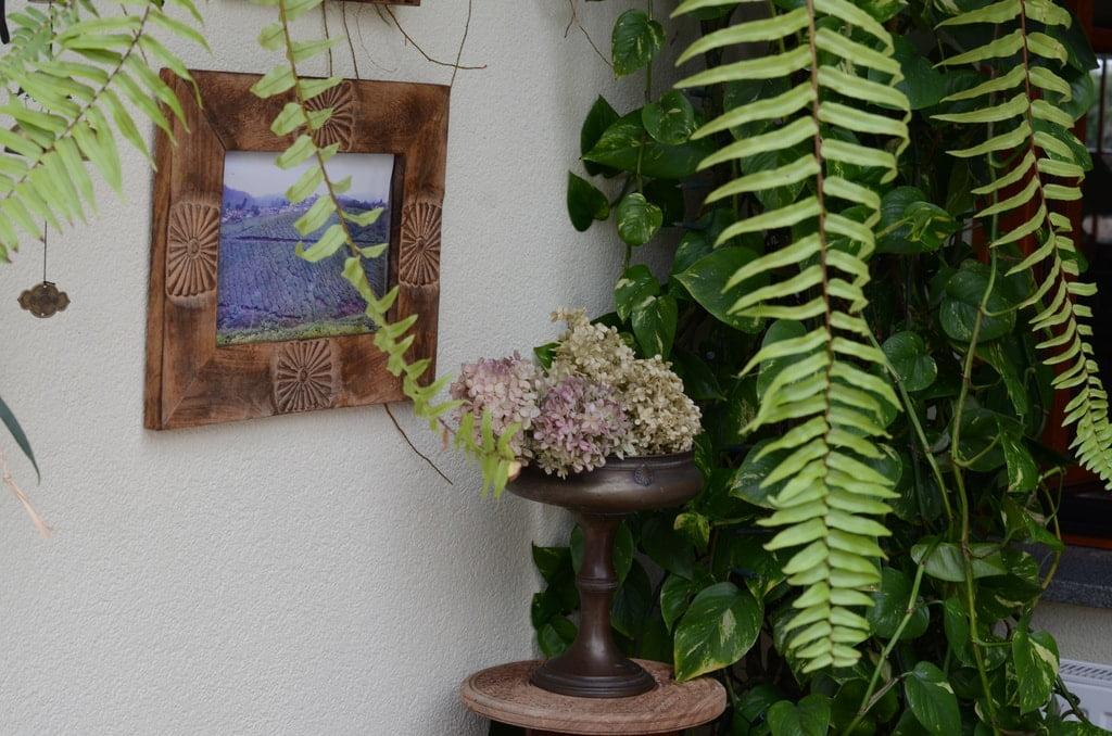 rośliny i suchy bukiet