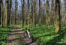 rower w zielonym lesie