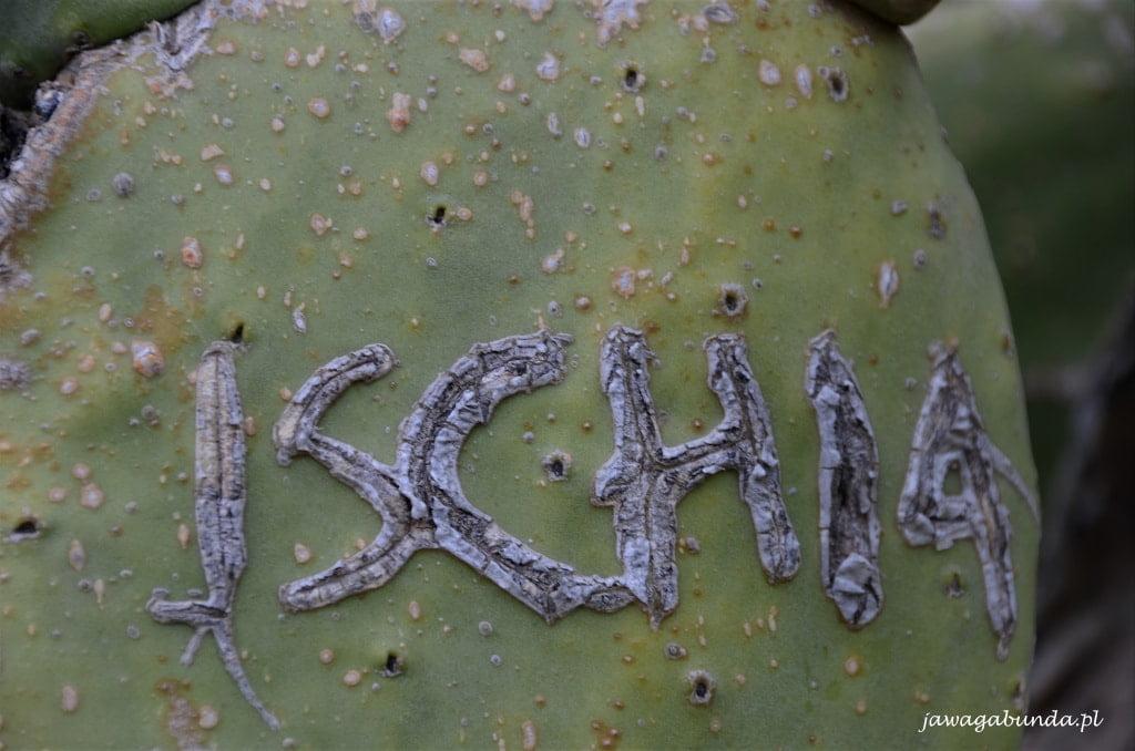 napis Ischia na liściu opuncji