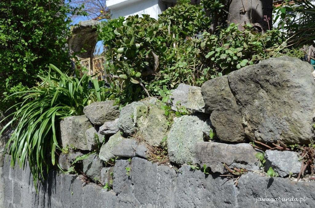 murek porośnięty zielenią