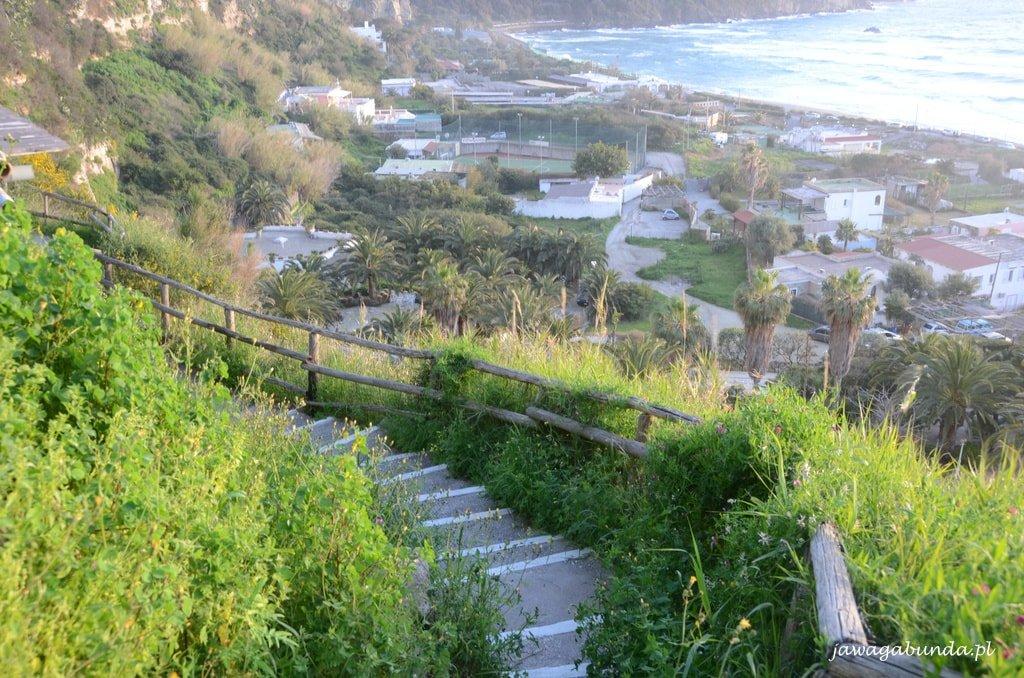 ścieżka schody wśród zieleni