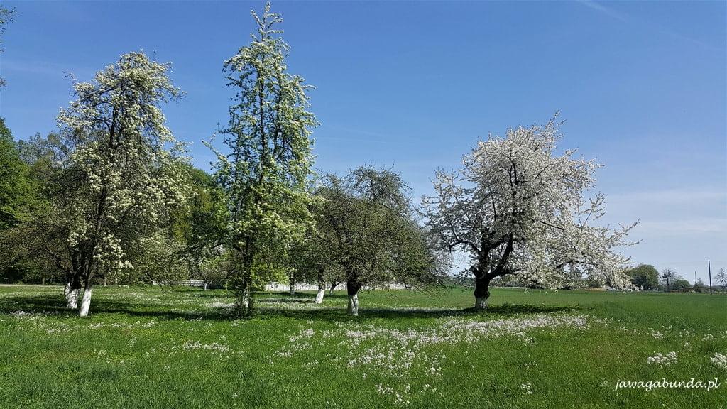 łąka i drzewa kwitnące