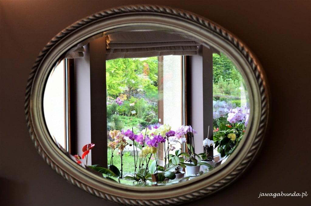piękny zapach różowo-malinowych kwiatów, które wręcz zasypują całe krzewy.