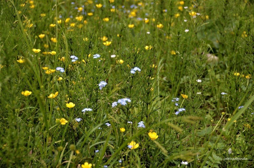 łąka w Tatrach