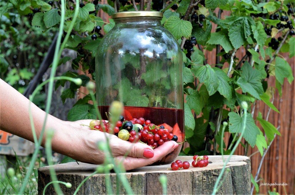 owoce i butelka z nalewka ratafią