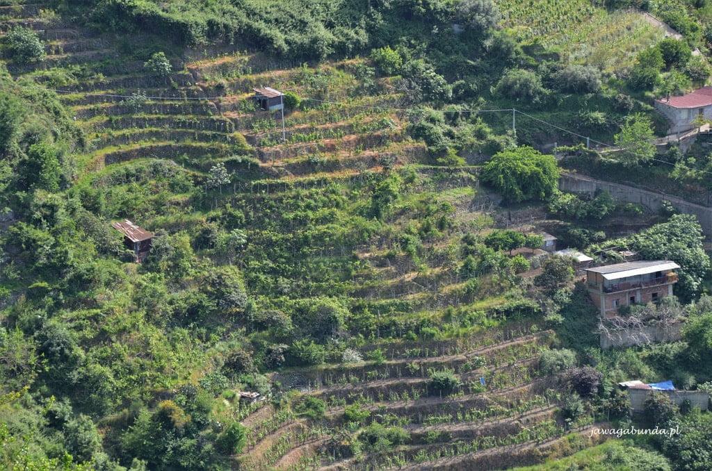 Kalabria winnice