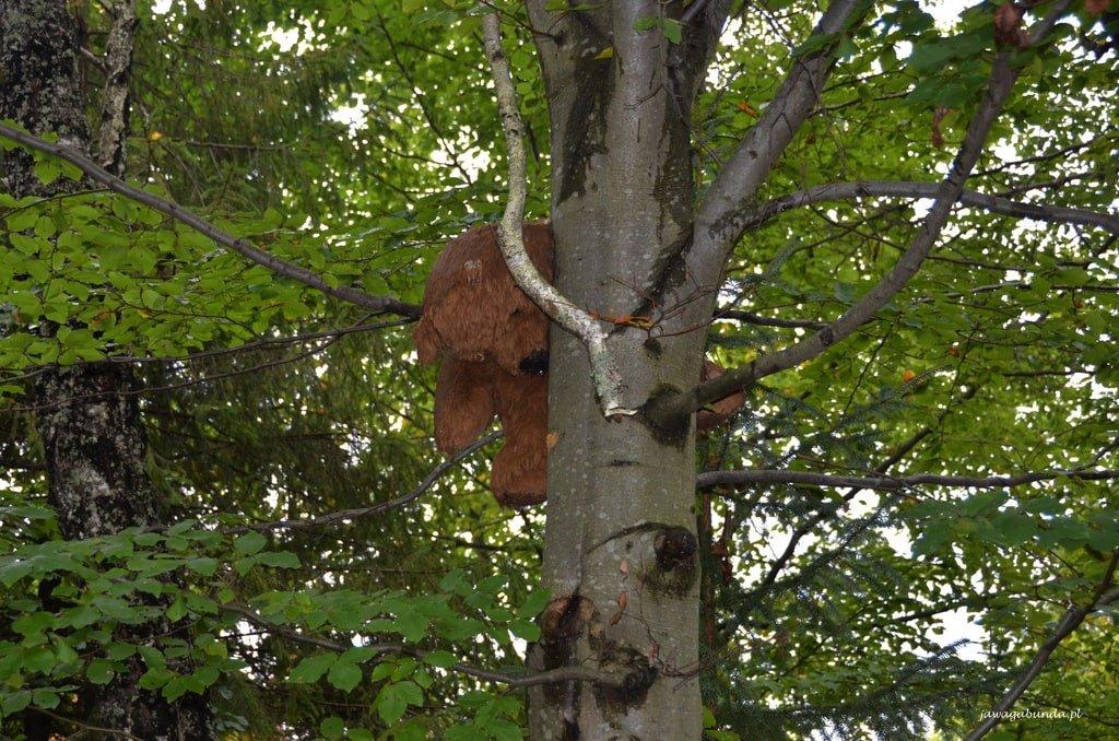 pluszowy niedźwiadek na drzewie