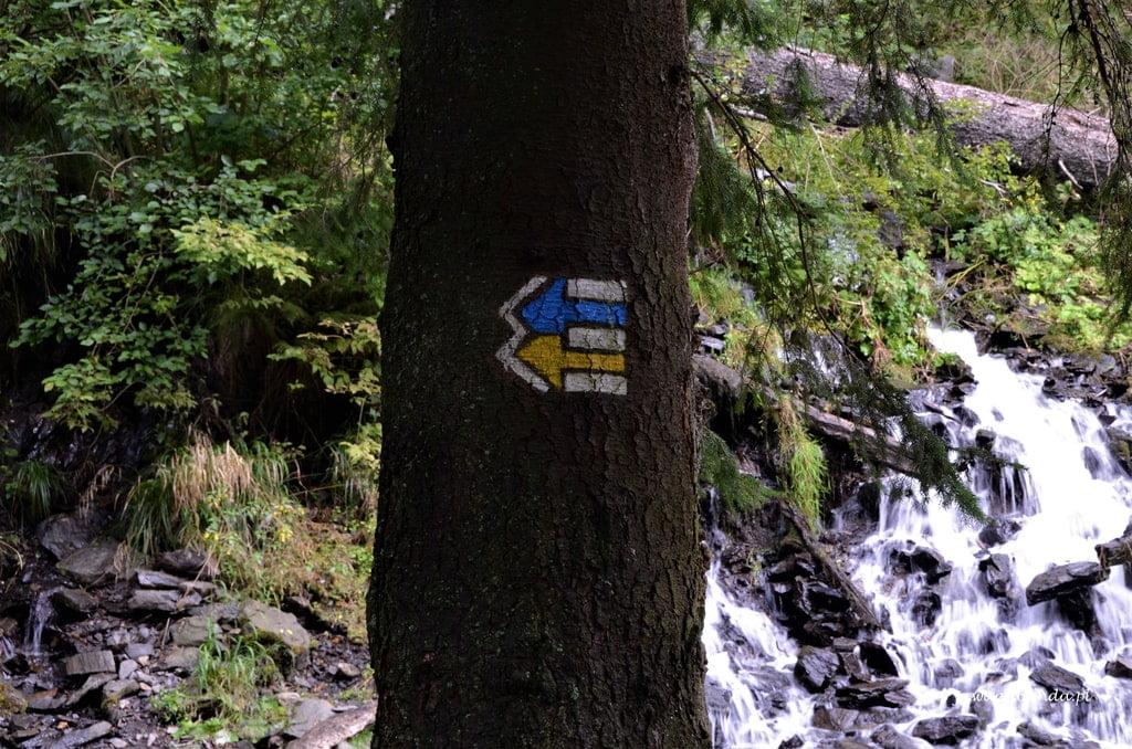 szlak namalowany na drzewie