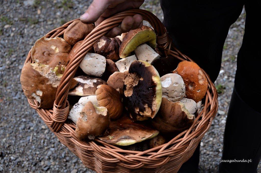 grzyby w koszyku