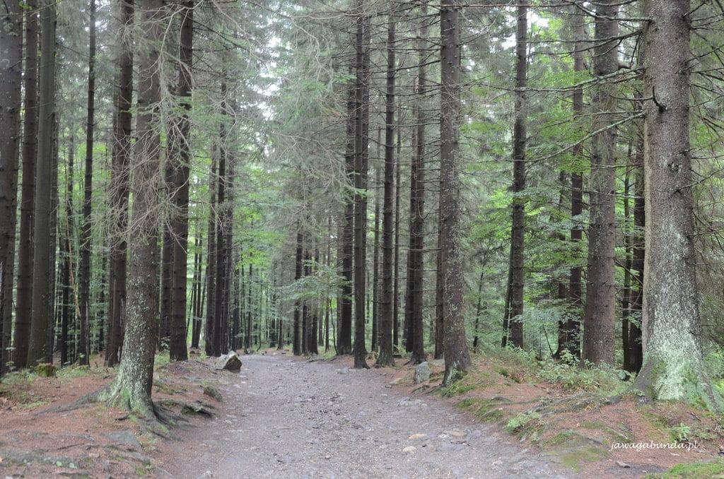 las i ścieżka