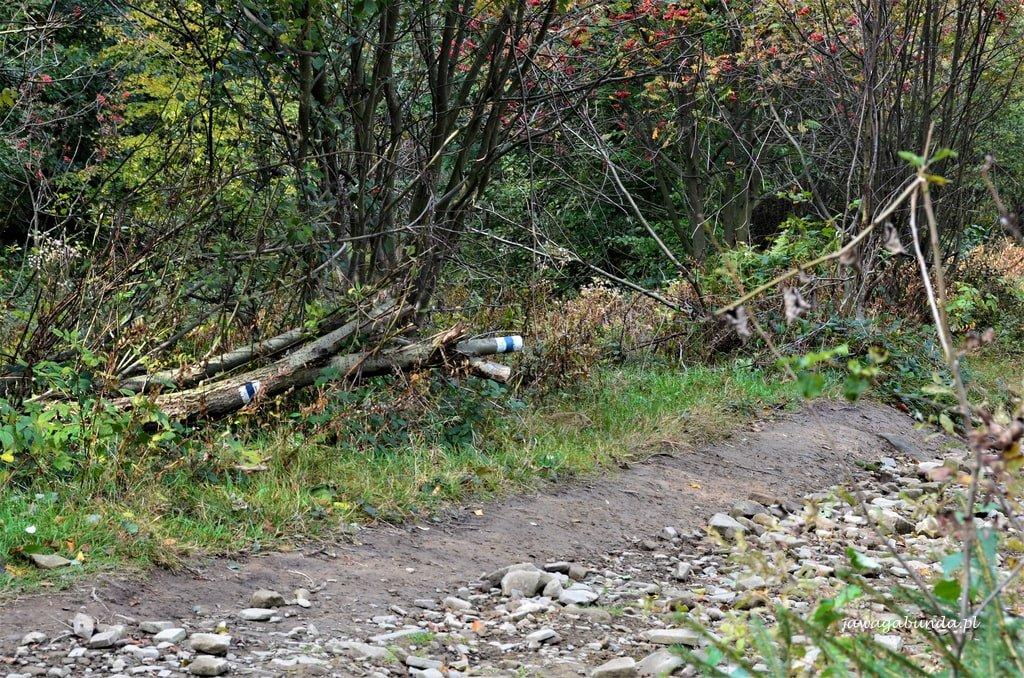 szlak na przewróconej kłodzie drzewa