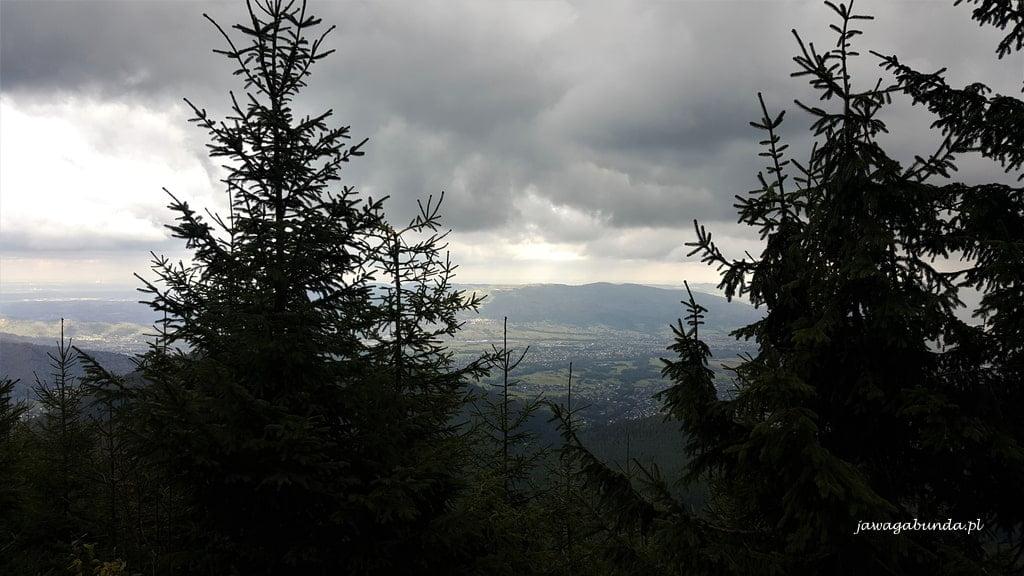 dwa świerki i widok na góry pomiędzy nimi
