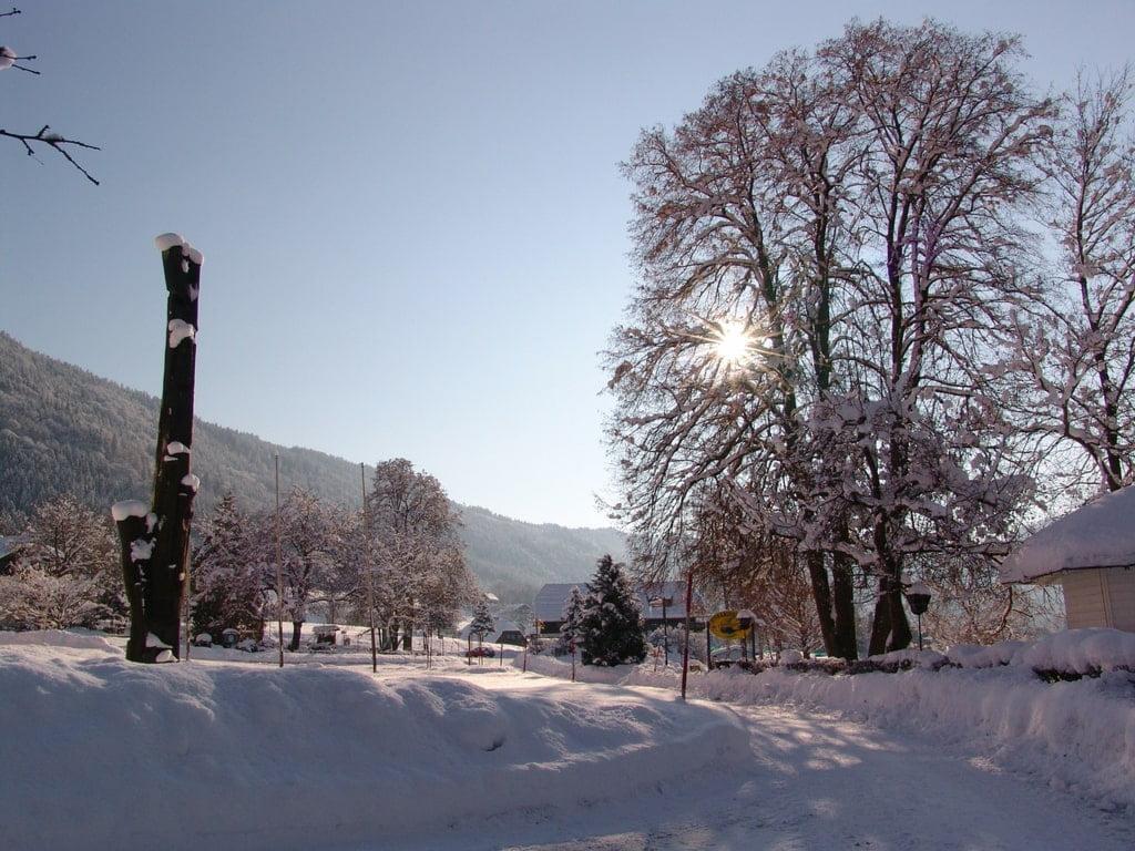 zaśnieżone drogi i drzewa