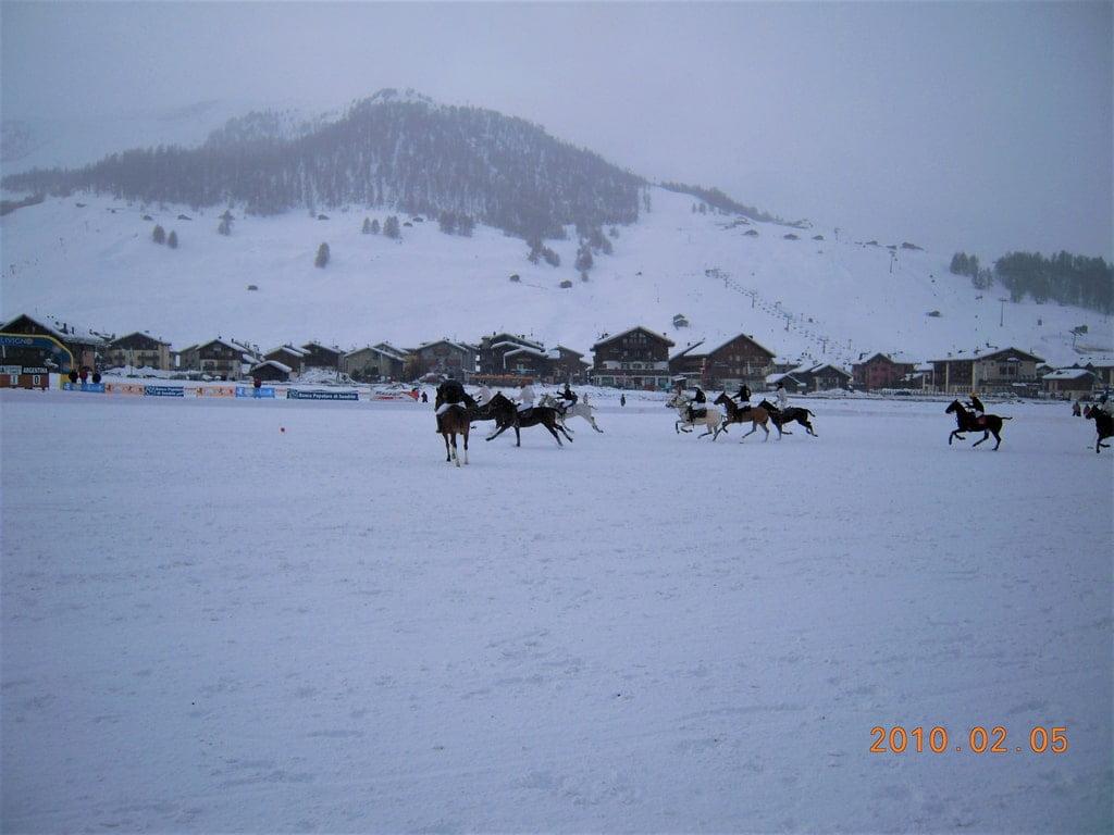 konie na śniegu - gra w polo
