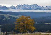 widok na Tatry na pierwszym planie drzewo z żółtymi liśćmi