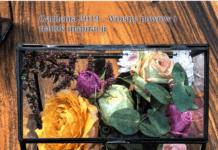 kwiaty w mini szklarence