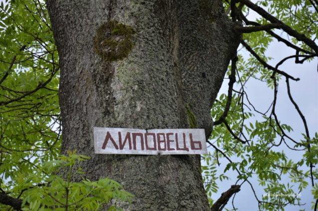 Tabliczka na drzewie