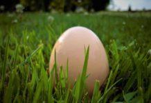 jajo na zielonej łące