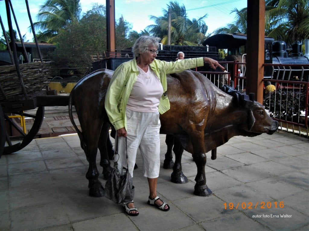 sztuczna krowa centrum Hawany
