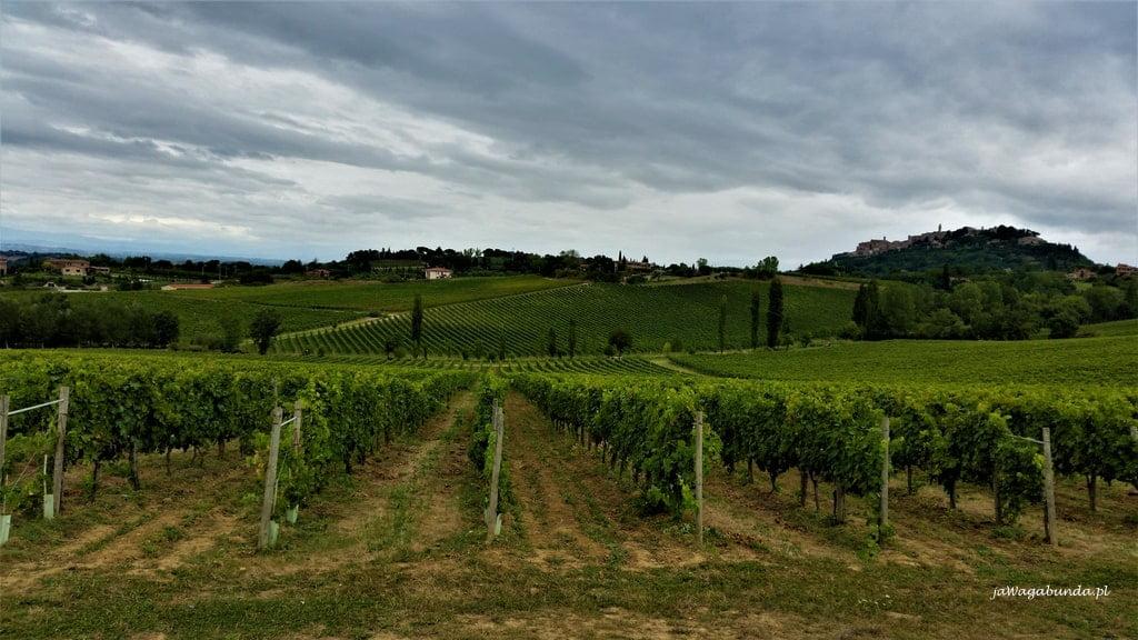 pola winorośli