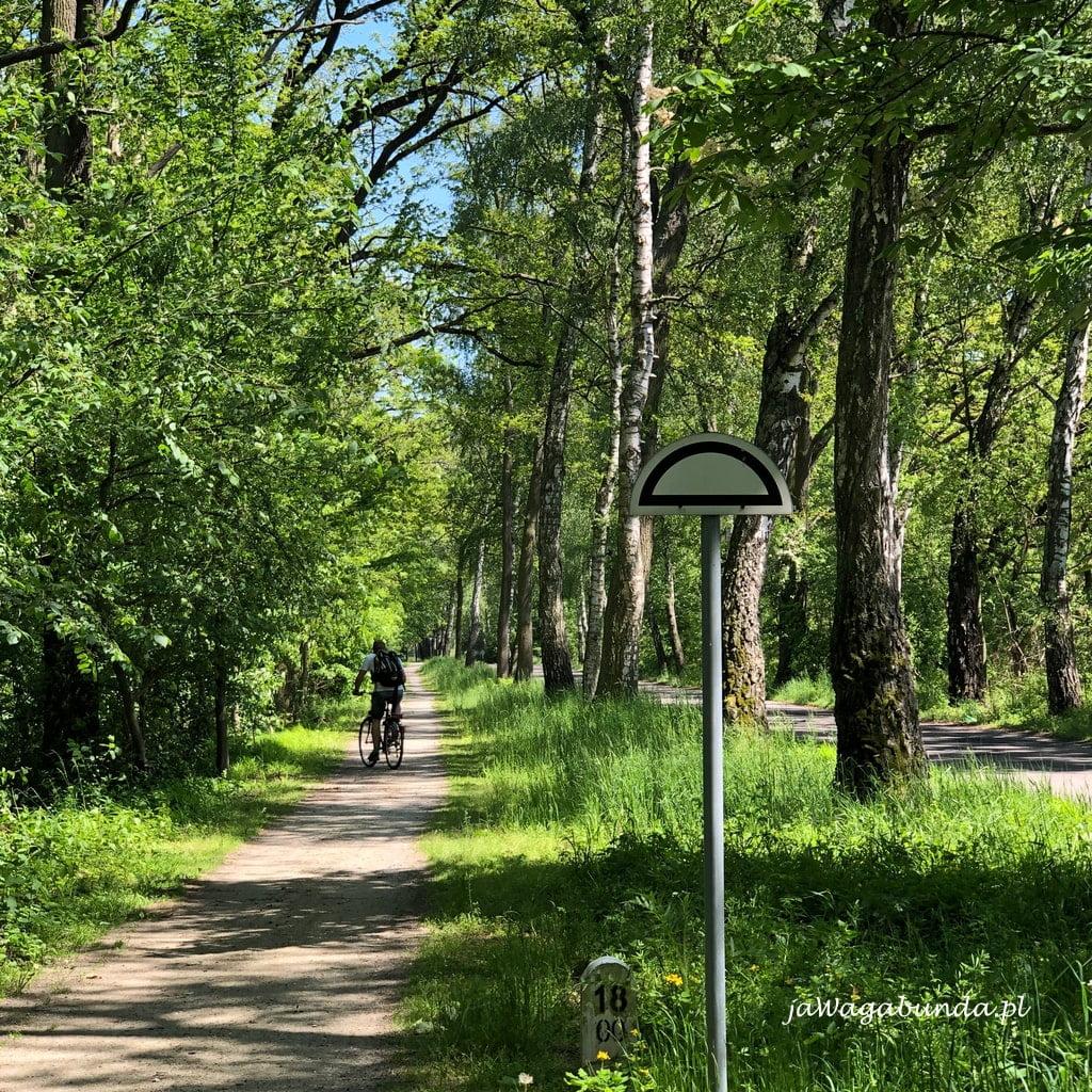 Rowerzysta na trasie w lesie