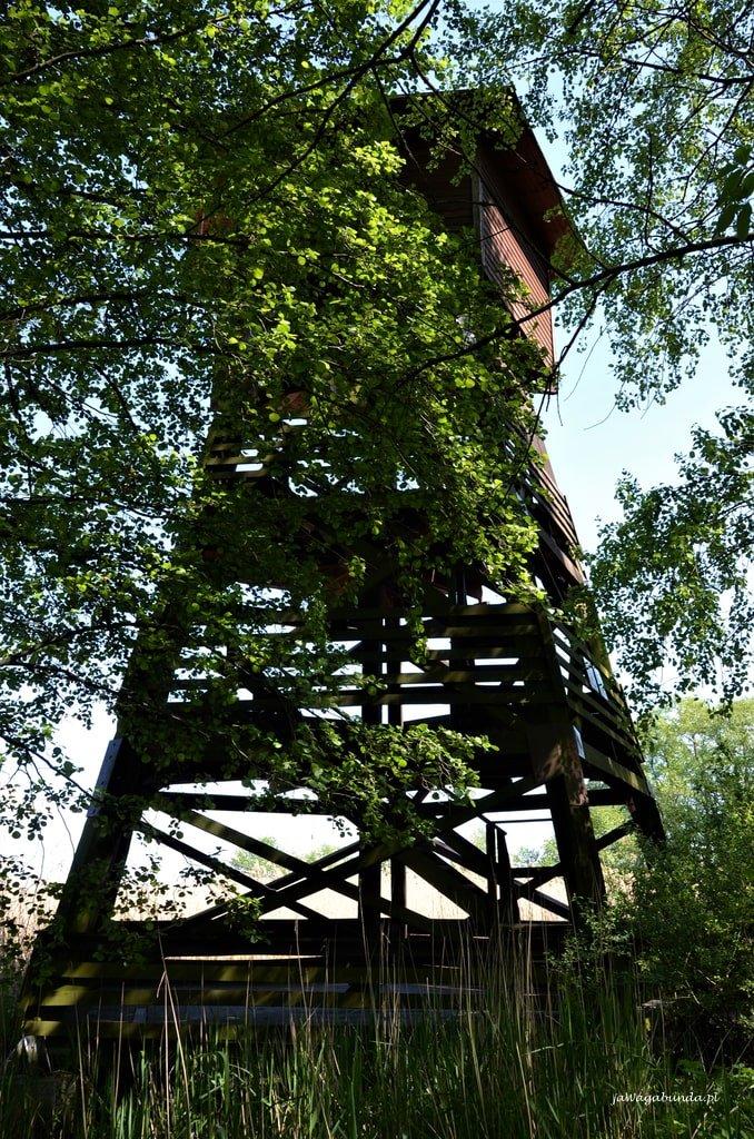 wieża obserwacyjna ptaków