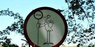 znak stopu z ptakiem
