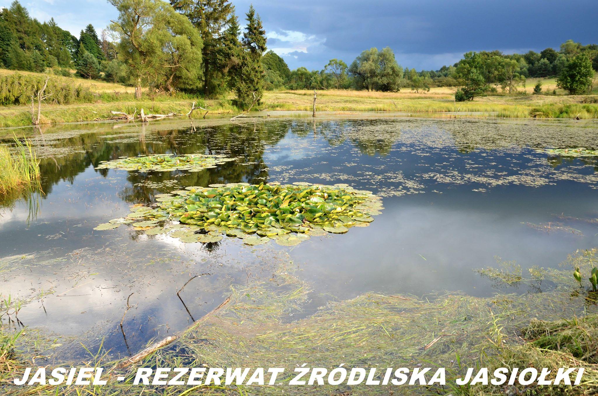 rezerwat przyrody źródła rzeki