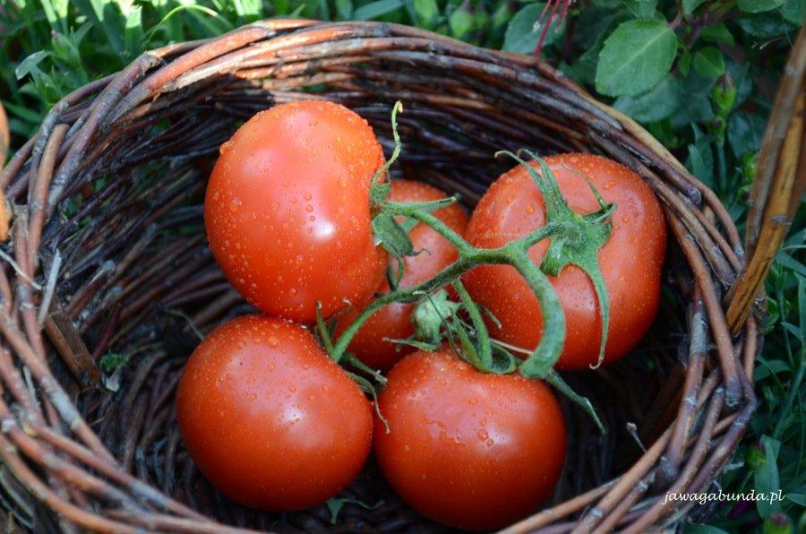 Nawożenie własnych pomidorów jest prostą sprawą - warto wybrać odpowiedni nawóz.
