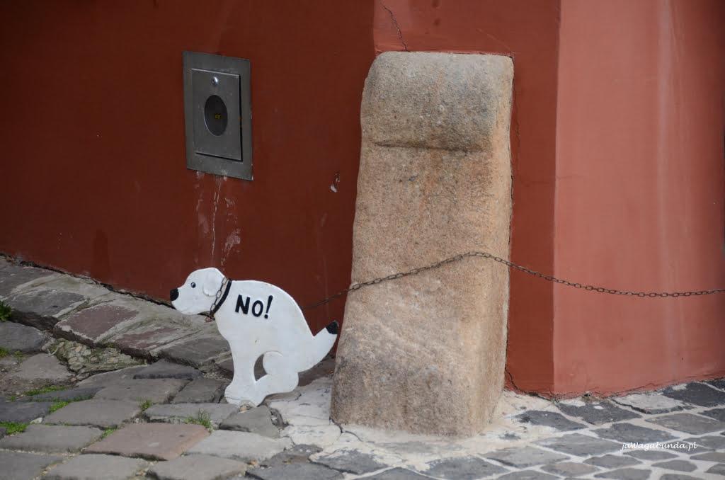 pies sikający na murek i napis no