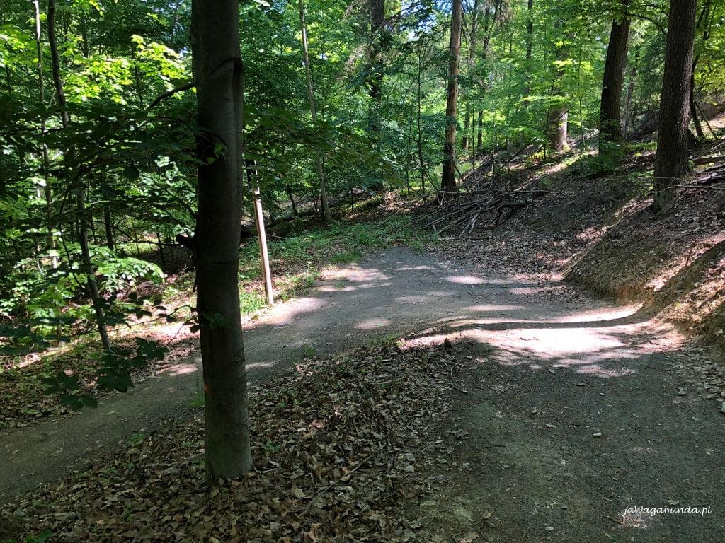 Tak wygląda przykładowa ścieżkaZakręt o 180 stopni Single Track w Górach Kaczawskich